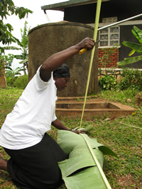 Ugandan weaver preparing banana leaf stalk